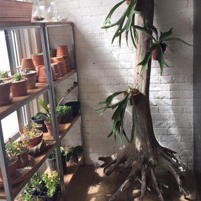 Flora Garden Shop Beacon New York
