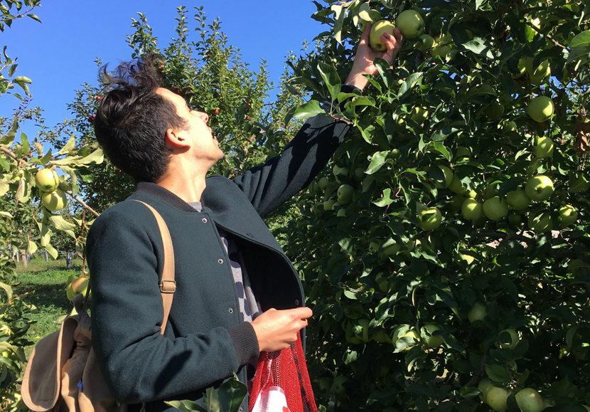 man apple picking on a farm